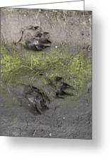 Footprints Of A Large Dog In The Mud Netherlands Greeting Card
