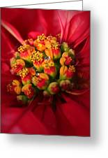 For Christmas Greeting Card