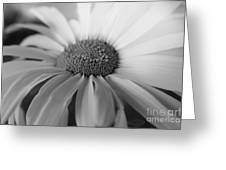 For My Daisy Greeting Card