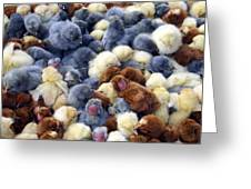 For Sale Baby Chicks Greeting Card