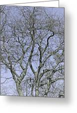 For The Love Of Trees - 2  Greeting Card