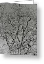 For The Love Of Trees - 2 - Monochrome  Greeting Card