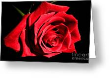 For You My Love Greeting Card