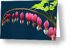 Bleeding Hearts For Your Love Greeting Card
