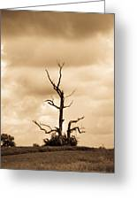 Foreboding Clouds Over Ghost Tree 1 Greeting Card