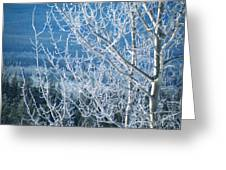 Foreground Frost Greeting Card