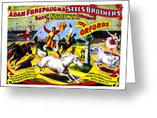 Forepaugh And Sells The Orfords Greeting Card