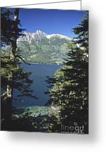 Forest And Lakes Lanin National Park Greeting Card