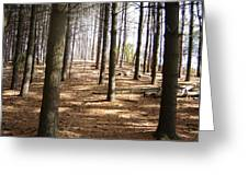 Forest And Trees Greeting Card