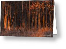 Forest At Sunset Greeting Card