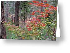 Forest Autumn Greeting Card