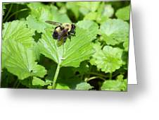 Forest Bee 7260 Greeting Card