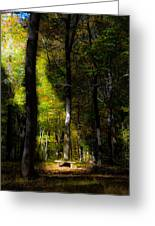 Forest Bench Greeting Card