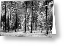 Forest Black And White Greeting Card