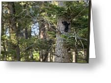 Forest Black Bear Cub Greeting Card