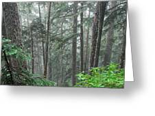 Forest Bluff Greeting Card
