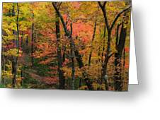 Forest Blush Greeting Card