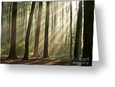 Forest Greeting Card by Boon Mee