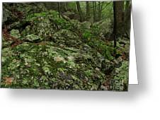 Forest Boulder Field Greeting Card