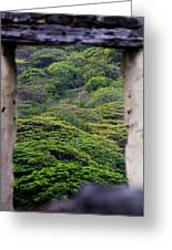 Forest Canopy Through The Window Of The Ruins Greeting Card