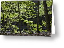 Forest Cathedral Greeting Card