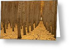Forest Cathedral - One Greeting Card