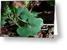 Forest Clover Greeting Card