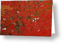 Forest Colors Of Fall Greeting Card by Donald Torgerson