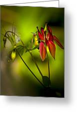 Forest Columbine  Greeting Card