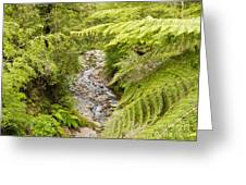 Forest Creek In Lush Rainforest Jungle Of Nz Greeting Card