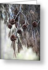 forest decoration - A pine tree give us a natural autumn decoration  Greeting Card