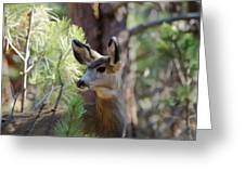 Forest Doe Greeting Card