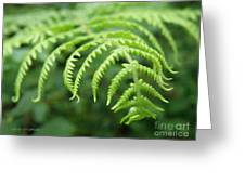 Forest Fern Greeting Card