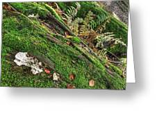 Forest Floor Fungi And Moss Greeting Card