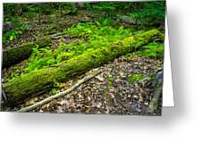 Forest Floor Gosnell Big Woods Greeting Card
