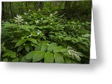 Forest Flowers Greeting Card