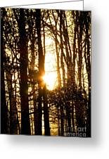 Forest Flurry Lightscape  Greeting Card