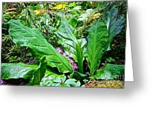 Forest Foliage Greeting Card