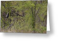 Forest Glimpse Greeting Card