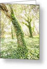 Forest Glow - The Magical Trees Of The Los Osos Oak Reserve Greeting Card
