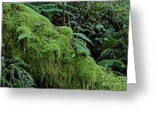 Forest Greenery Greeting Card