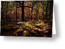 Forest Illuminated Greeting Card by Linda Unger