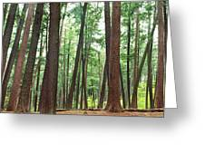 Forest In Early Morning, Wetlands Greeting Card