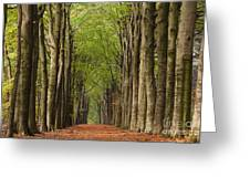 Forest In The Fall Greeting Card