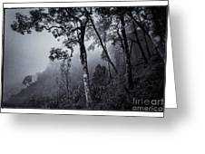 Forest In The Fog Greeting Card