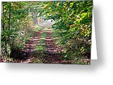 Forest Invitation Greeting Card