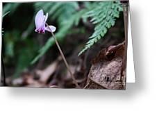 Forest Joy Greeting Card