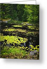 Forest Lake With Lily Pads Greeting Card