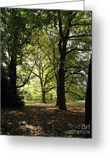 Forest Light And Shadows Greeting Card