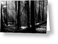 Forest Light In Black And White Greeting Card